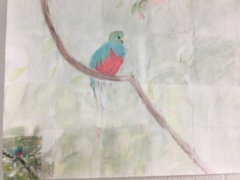 7th Grade Rainforest Artlink