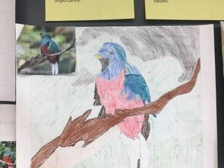 7th Grade Rainforest Artlink Project